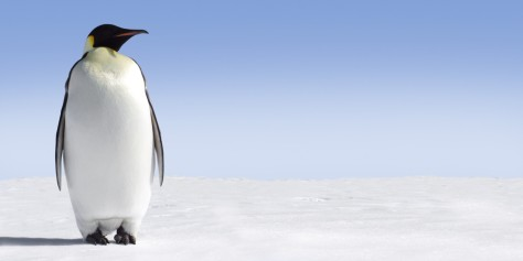 o-EMPEROR-PENGUINS-facebook