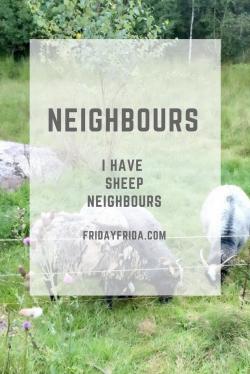 Sheep Neighbours