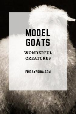 Model Goats