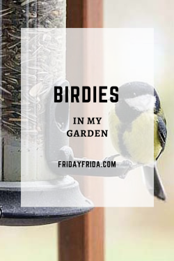 Birdies in my garden